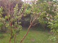 jardin_jpg_60.jpg
